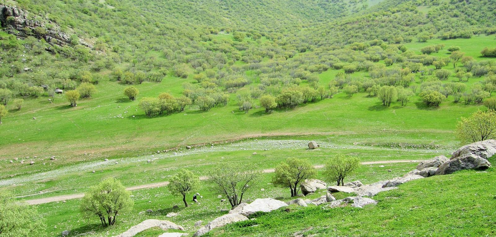 بلوط، بیخ گوش خرمآباد
