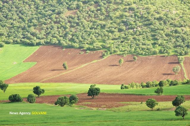 جنگلخواری روستاییان در لُرستان