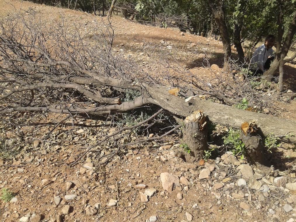 ۱۲۰ هزار هکتار بلوط در معرض خشکسالی