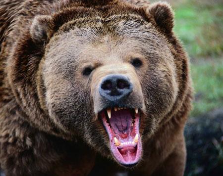حملهی خرس به کوهنورد خرمآبادی