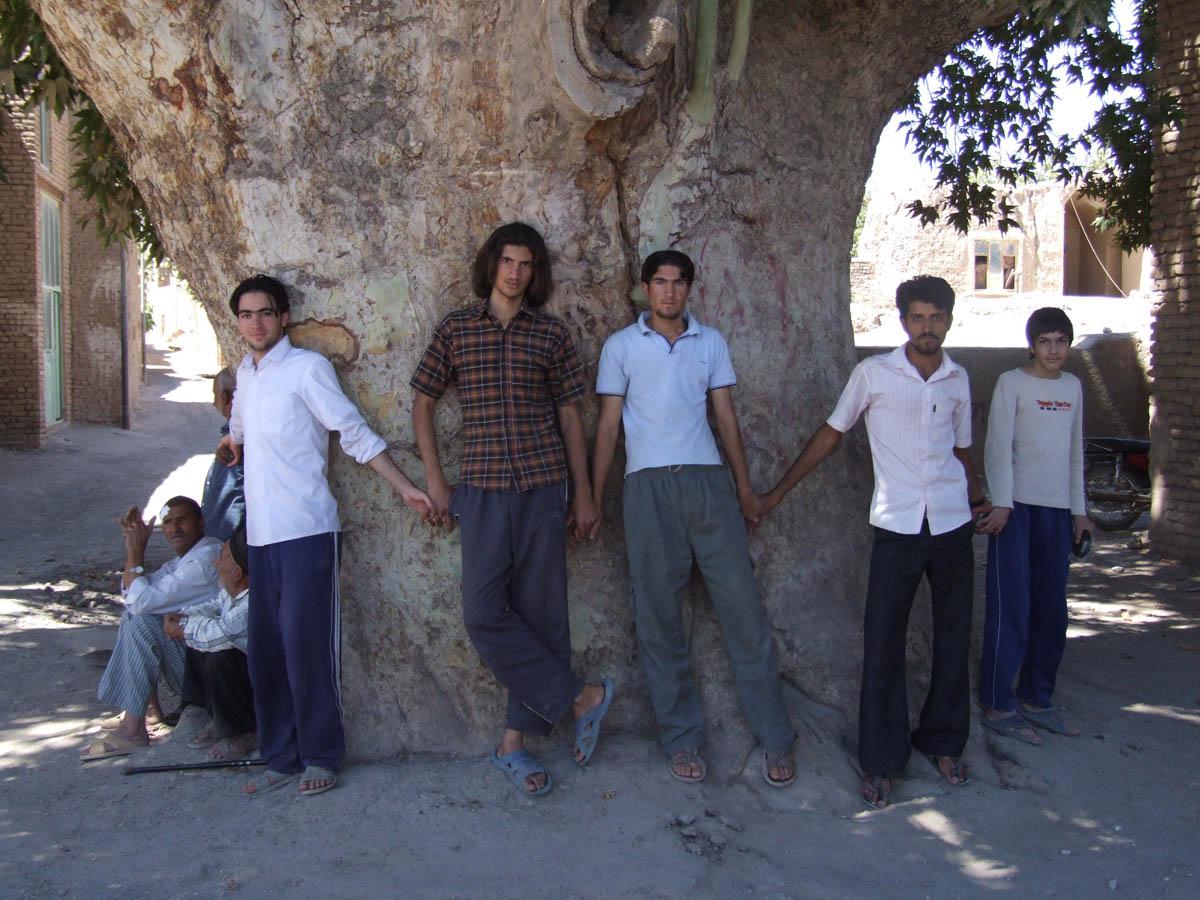 رادیو جوان و ثبت ملی یک درخت