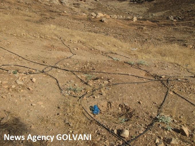 لولهکشی بدون آب ۲۰ هزار نهال را در خرمآباد خشکاند