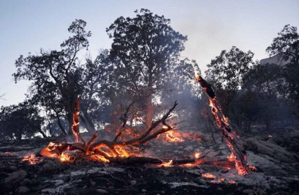 در پی نزاع خانوادگی،٢٠٠ هکتار جنگل ایلام خاکستر شد
