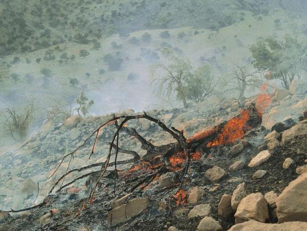 دستگیری عاملان آتشسوزی جنگلهای پلدختر