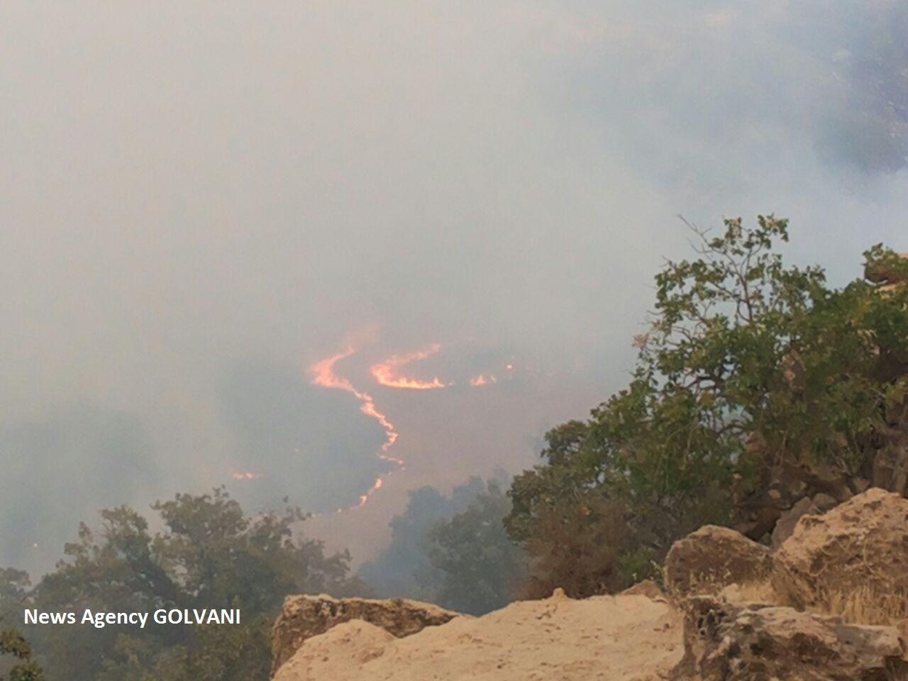 آتشسوزی در کیالوی لُرستان عمدی بود/ تصاویر اختصاصی