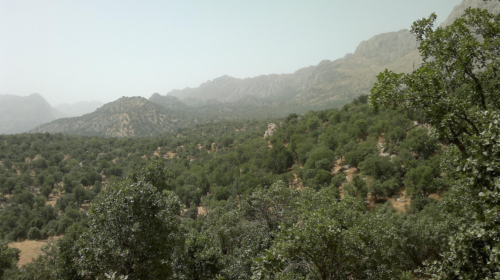 اهمیت جنگلهای زاگرس از دریاچه ارومیه بیشتر است