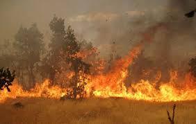 حریق بخشهایی از پوشش گیاهی پارک ملی بوجاق را سوزاند