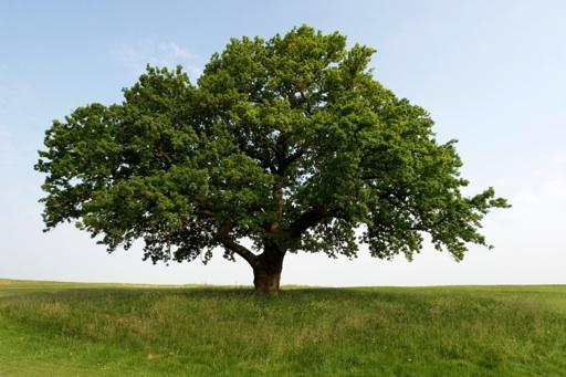 دادهنما: ارزش اکولوژیک درخت بلوط