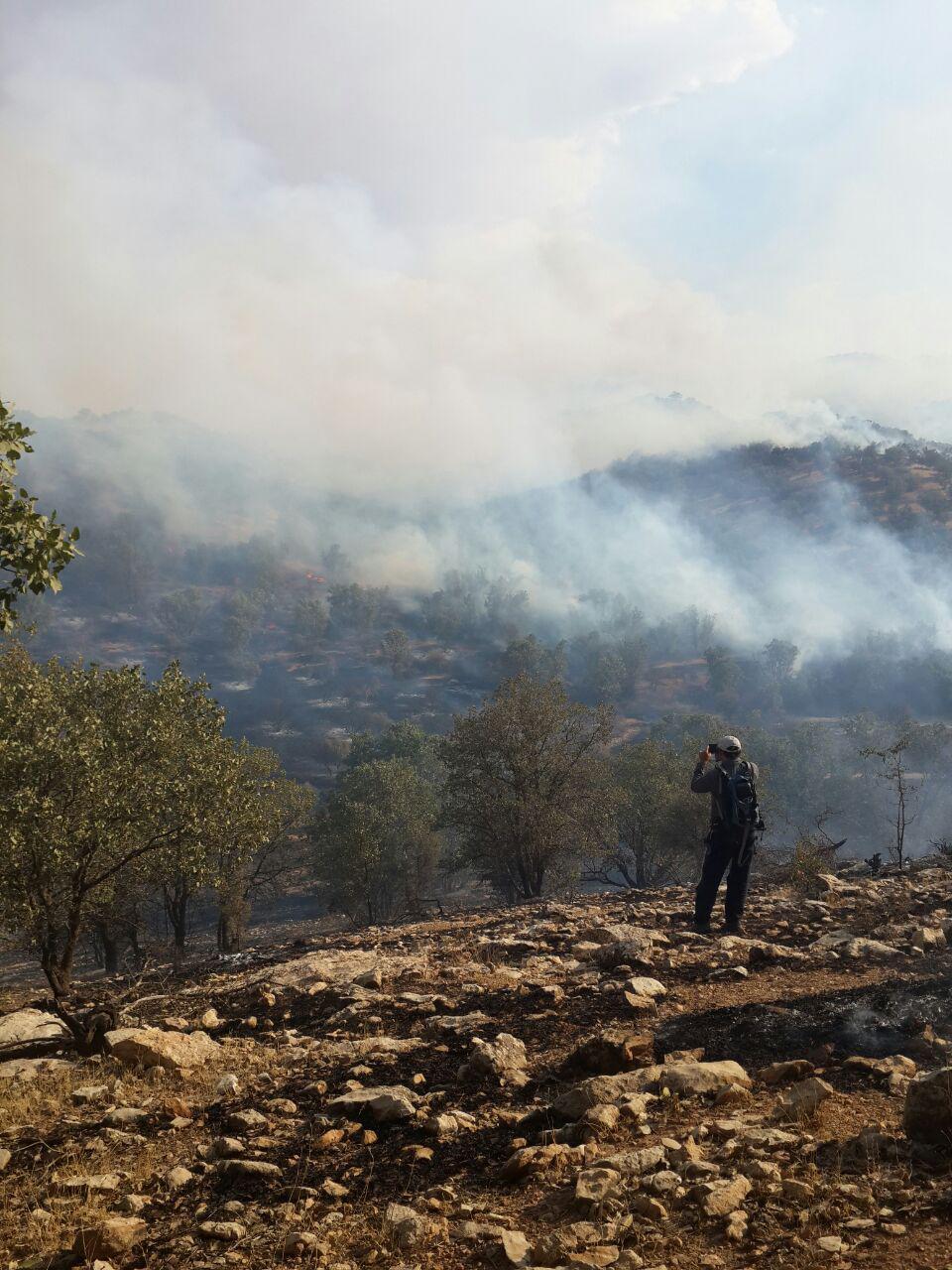 فیلم آتشسوزی در جنگلهای کوهدشت لُرستان