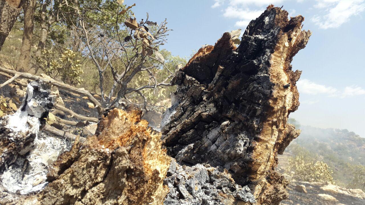 ۶ گونه درختی در تَرهان لُرستان سوختند