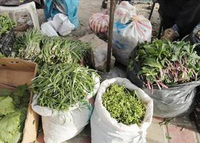 کشف ۱۵۰۰ کیلوگرم گیاهان دارویی قاچاق
