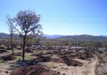 اختصاص ۶۰۰ میلیون تومان به کاشت درخت