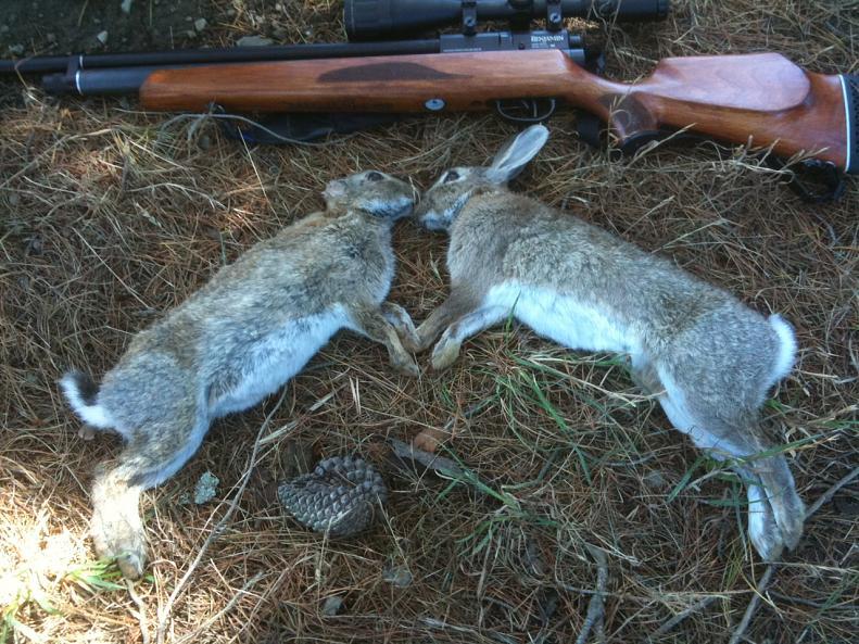 دستگیری شکارچیان خرگوش