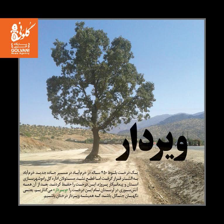 حال درخت «ویردار» خوب است