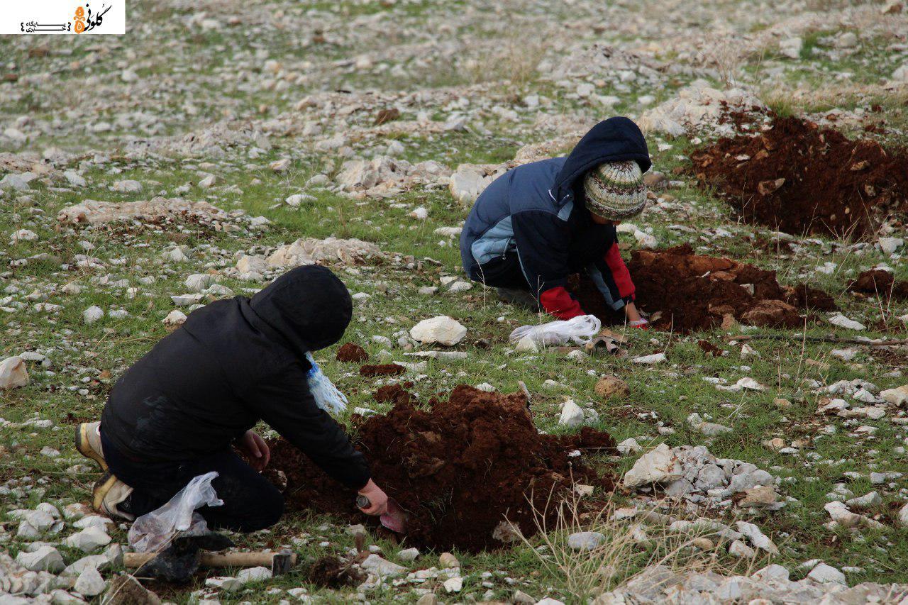 آموزش کاشت بلوط در نمایشگاه محیط زیست
