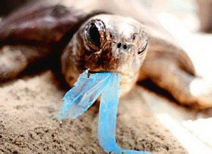 کیسههای پلاستیکی حذف میشوند