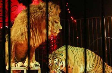 حذف حیوانات وحشی از سیرکها