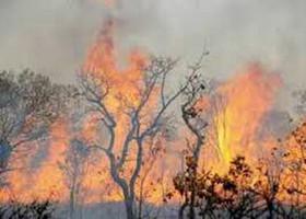 سالانه ۲۶۰۰هکتار از جنگلهای لرستان دچار حریق میشود