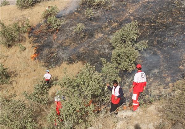دستورالعمل مقابله با آتشسوزی جنگلها ابلاغ شد