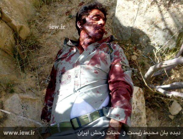 محیطبان پارک ملی بمو هدف گلوله شکارچیان قرار گرفت