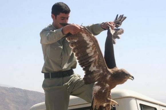 سه سال زندان برای شکارچیان غیرمجاز دورودی