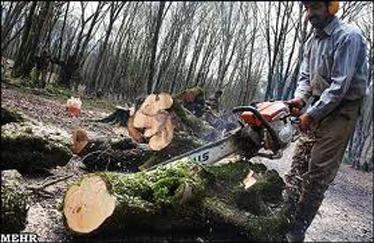 برداشت چوب از جنگلهای هیرکانی ۳۲درصد کاهش مییابد
