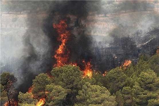 کاهش ۴۰درصدی آتشسوزی جنگلها در سال جاری