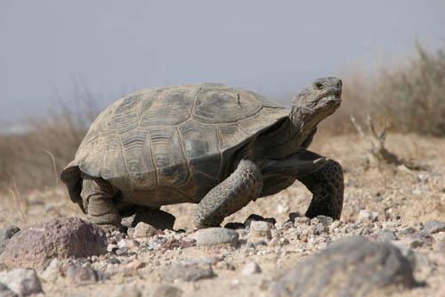 گرما و خداحافظی با لاکپشتها