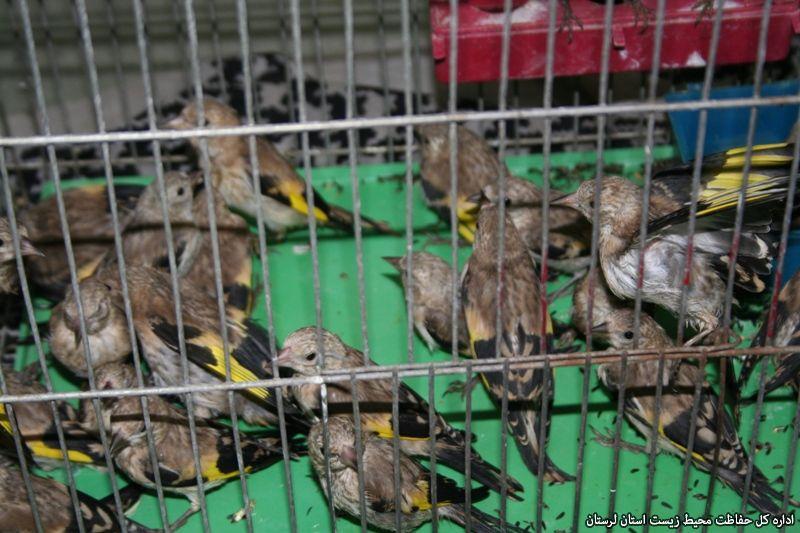 فروش حیوانات وحشی لرستان در سایت دیوار