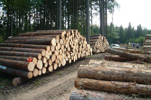تنفس جنگلها راهی خانه ملت شد