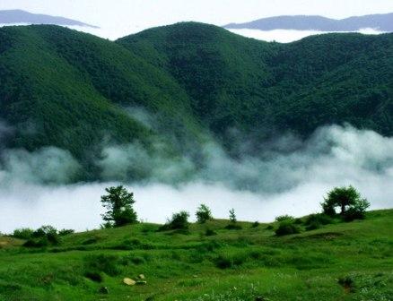 اعلام رسمی جنگل ابر بهعنوان منطقه حفاظتشده