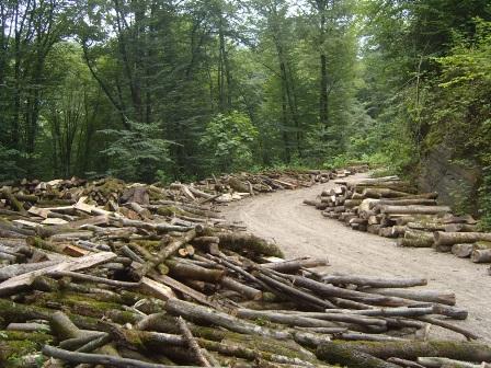 تشکر ابتکار از دستور حجتی برای نجات جنگلهای شمال