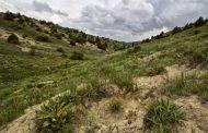 بازپس گیری ۱۶۰ هکتار از اراضی ملی ومنابع طبیعی در لرستان