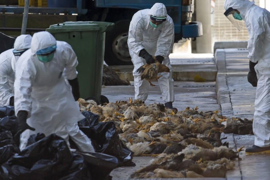 تداوم ممنوعیت شکار پرندگان تا رفع کامل خطر آنفلوانزای پرندگان