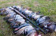 شکار پرندگان؛ مجرمان بی شریک نیستند