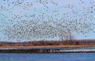 تداوم ممنوعیت شکار پرندگان در فریدونکنار