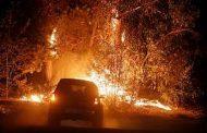جنگلها مستعد آتشسوزی