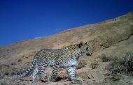 اشترانکوه زیستگاه و سنگرگاه پلنگ ایرانی