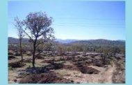 کاشت هزار نهال در خرمآباد