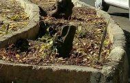 قطع درختان میدان شهدای فسا