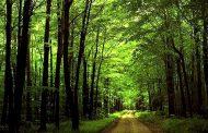 بهرهبرداری صنعتی از جنگلهای شمال ممنوع شد