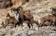 صدور پروانه شکار در دو منطقه از یزد و کرمان