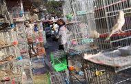 فروشندگان حیوانات، متخصصان بیتخصص