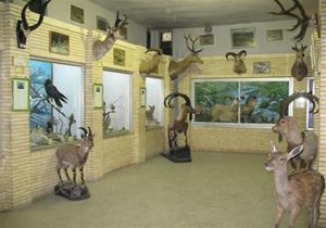 بازدید رایگان از موزه تاریخ طبیعی