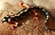 حفاظت اصولی از ۶ گونه در معرض انقراض کلید خورد