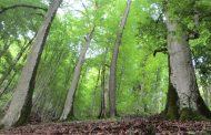 اجرای طرح تنفس در۱۵۰هزارهکتار از جنگلهای شمال