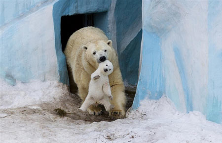 طنز/سوغات قطب شمال