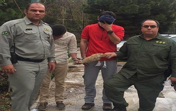 فروشنده دم روباه در فضای مجازی، دستگیر شد