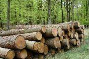 توقف ۸۰درصد قرارداد بهرهبرداری جنگلهای شمال