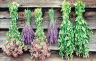 ۱۷۰۰ گونه گیاهی در لرستان وجود دارد